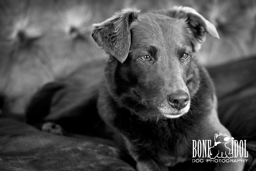 Contemporary Canine Portrait Photography in South London