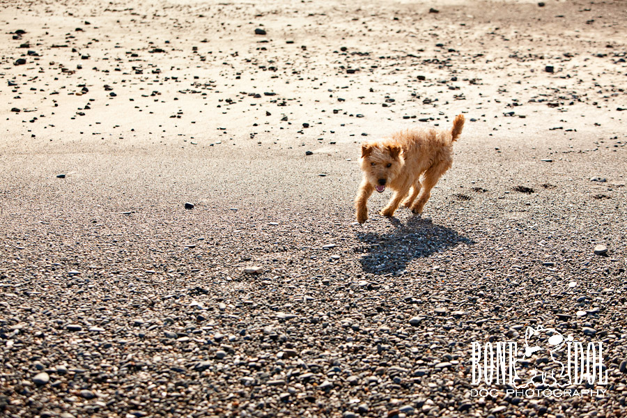 Dog Photography on the beach