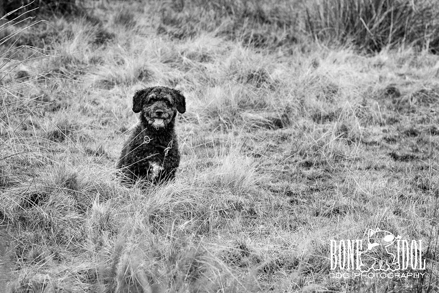 Photograph featuring Spanish Waterdog