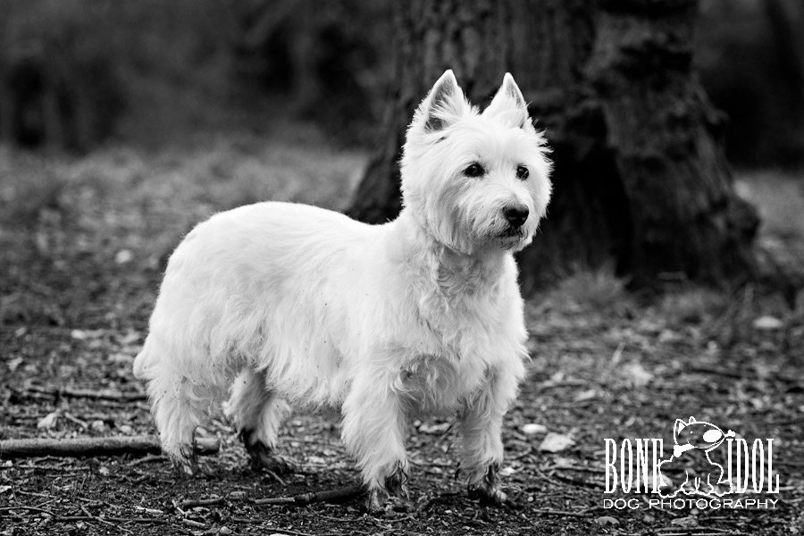 Photograph featuring West Highland White Terrier